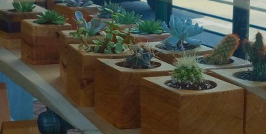 Succulents in hand carved wood pots