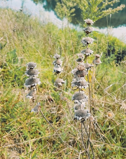 Lake Atlanta dead flowers